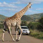 پارک ملی آفریقا