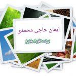 ایمان حاجی محمدی