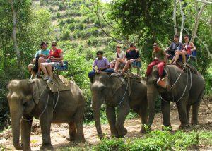 سفر با فیل