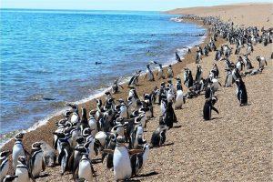 منطقه حفاظت شده پنگوئن های پونتا تومبو